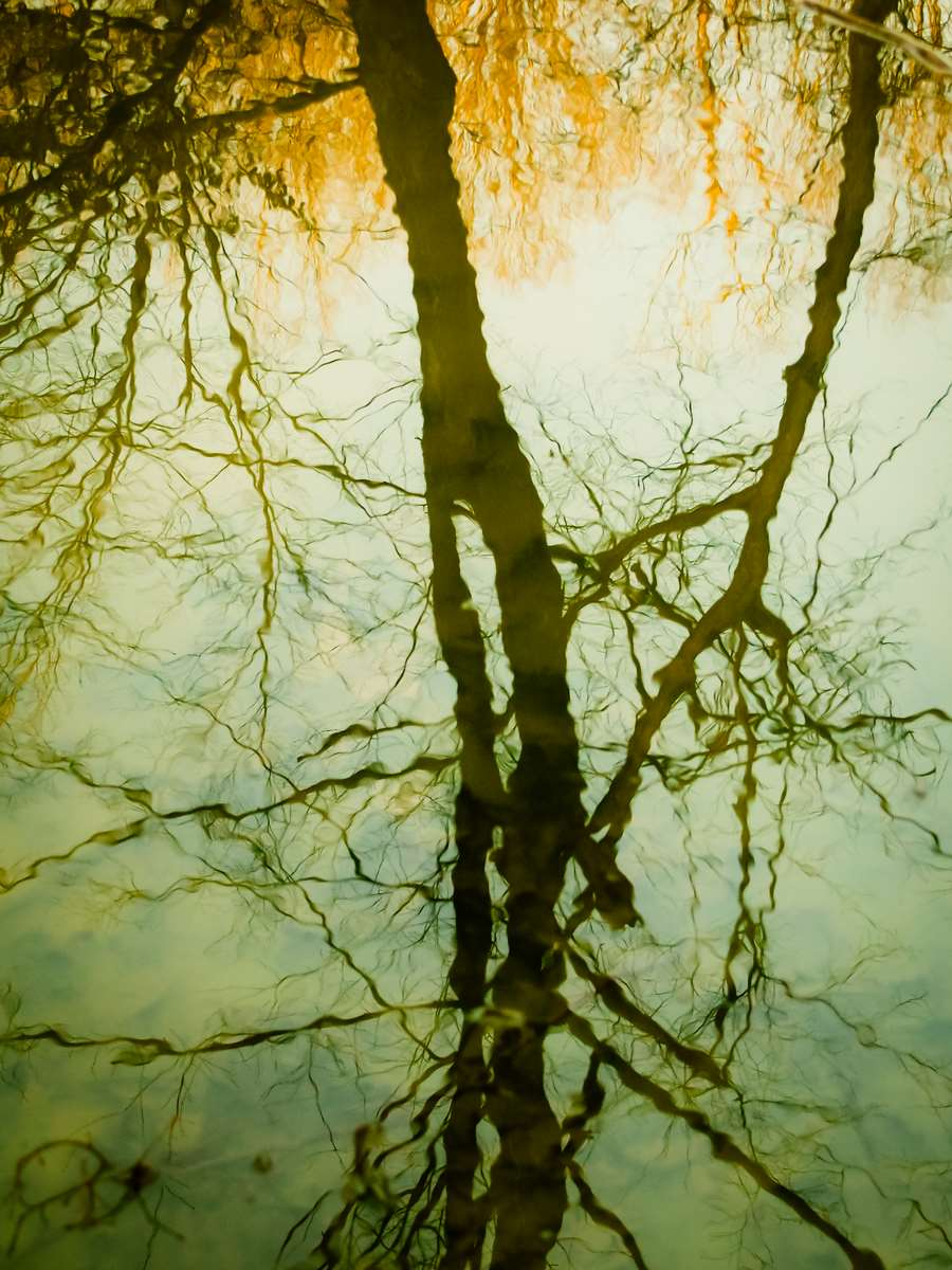 Lake reflections in the wood