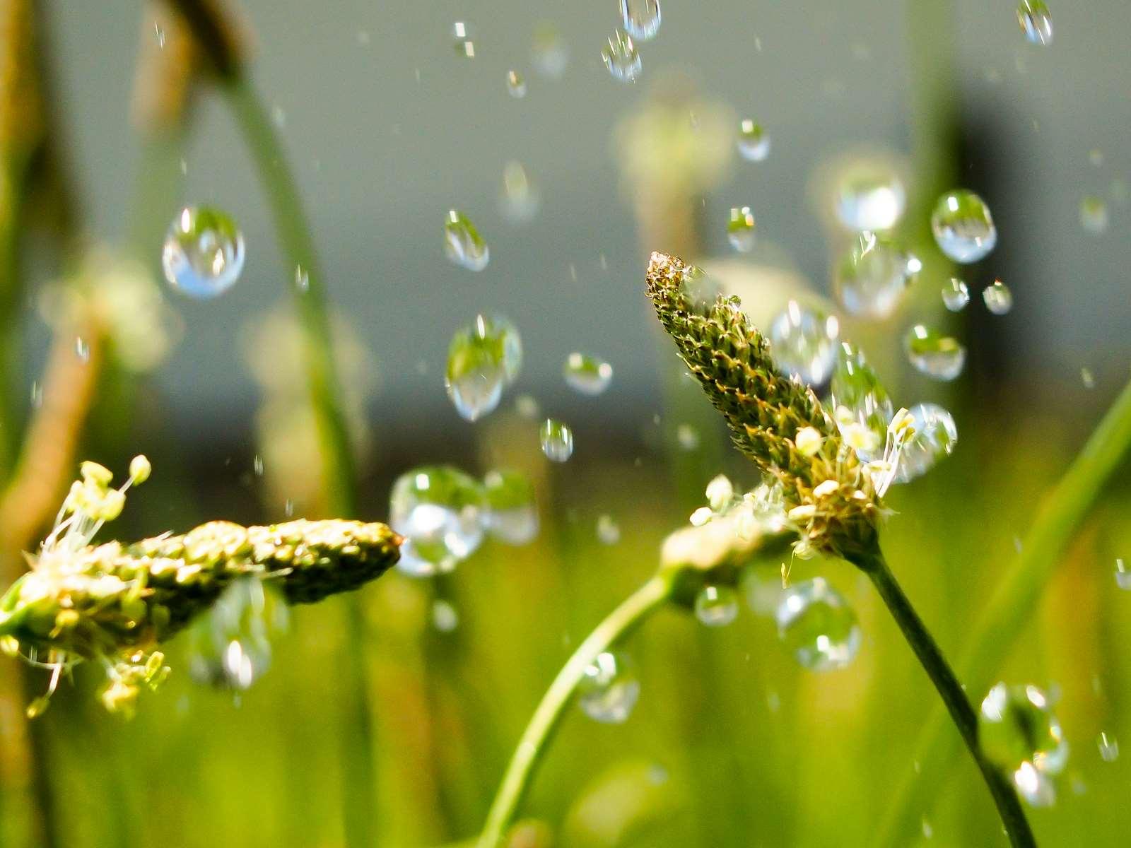 Summer rain in the green