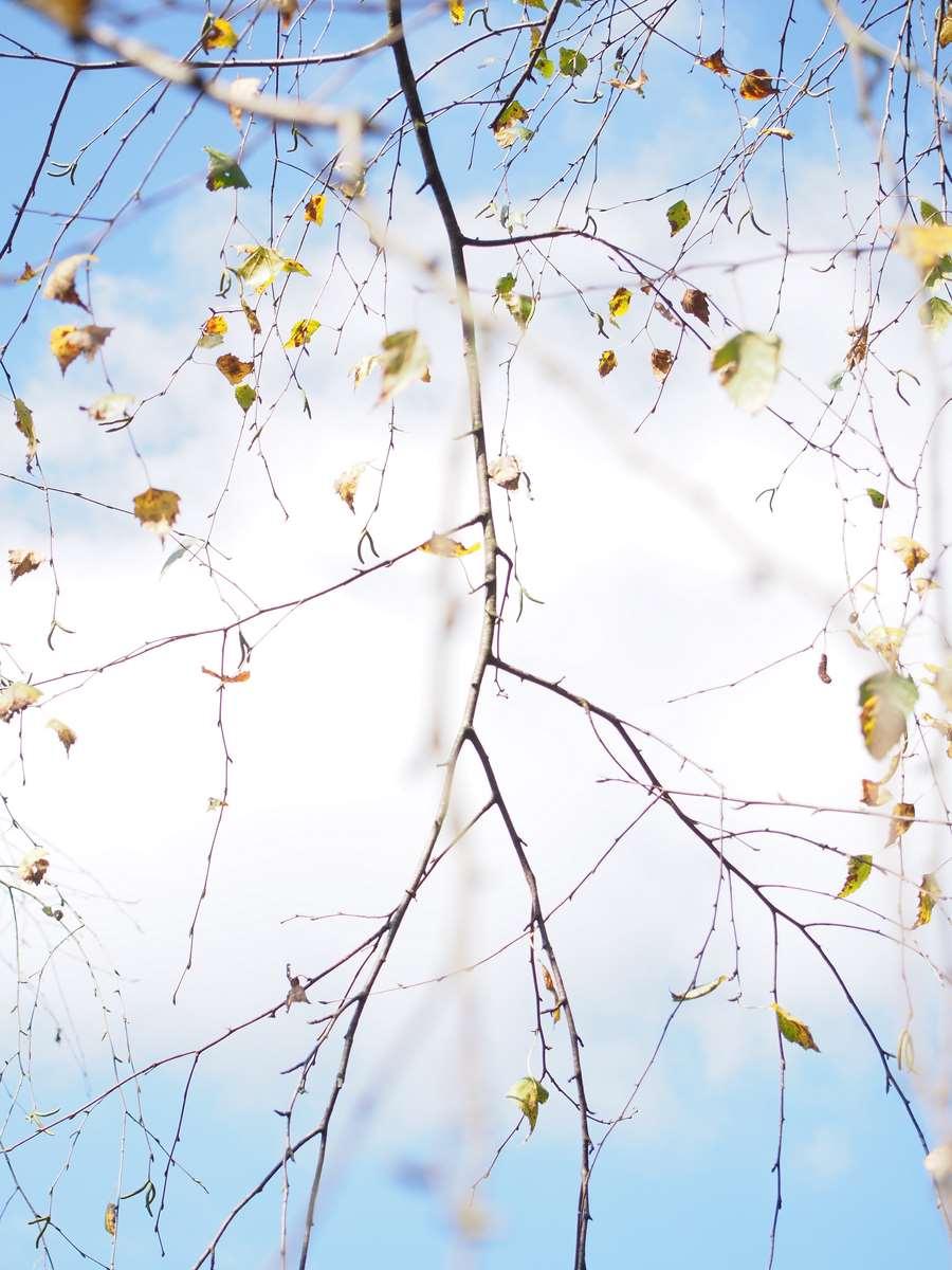 Gentle spring leaves in the fresh blue sky