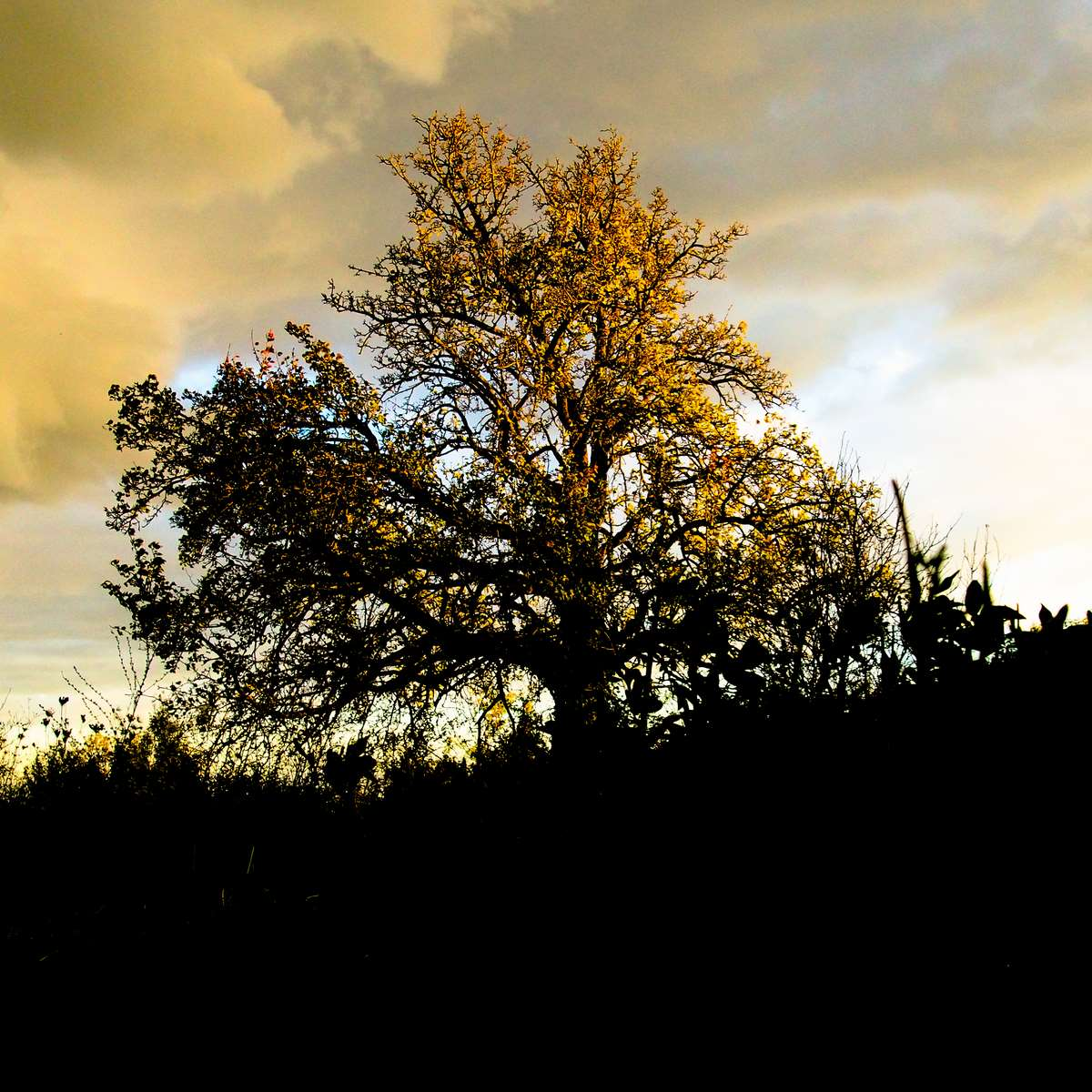 Tree in the late evening sun
