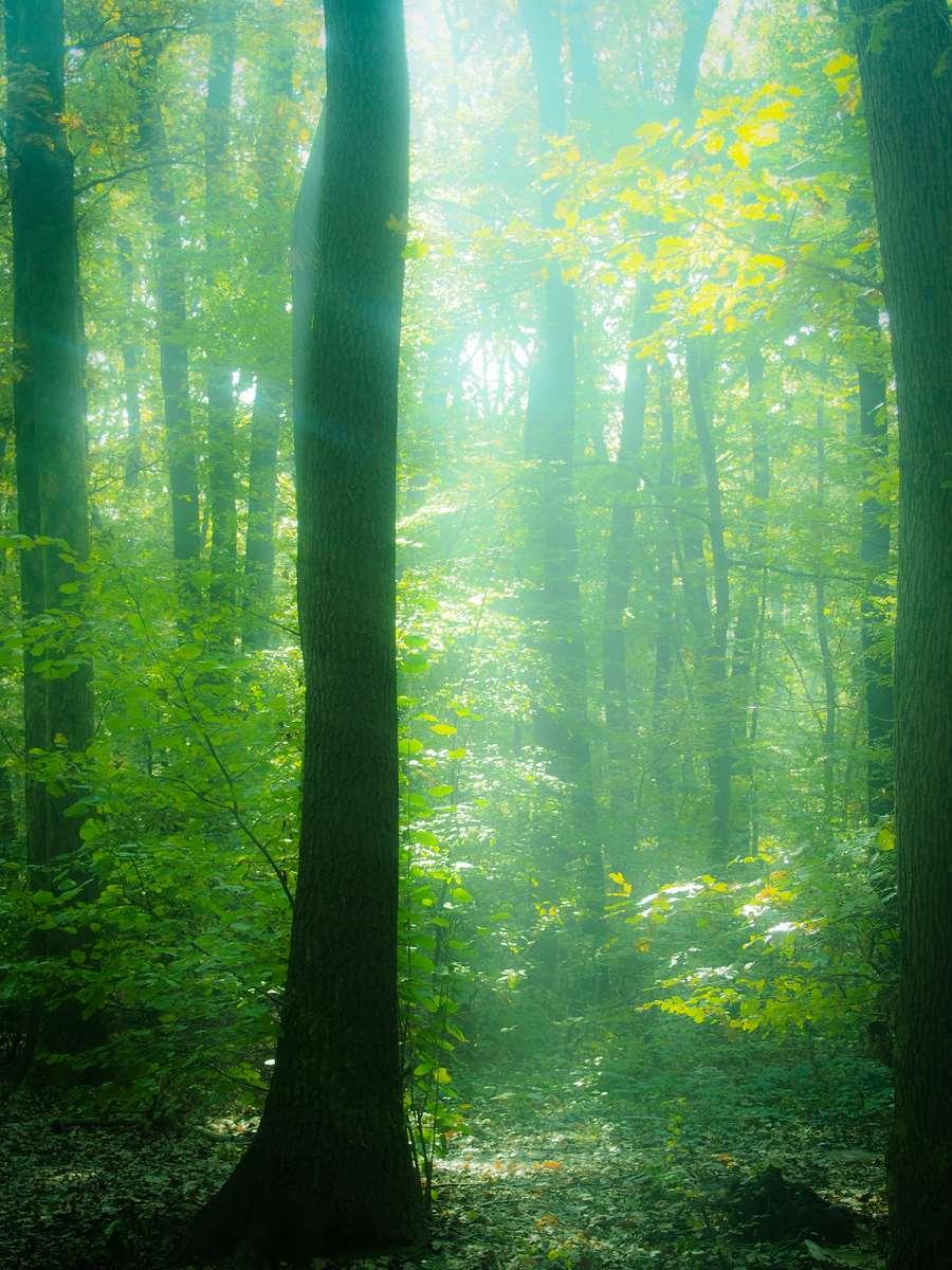 Forrest Myst