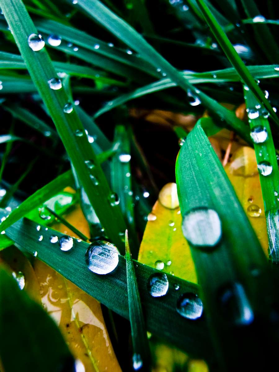 Colorfull drops