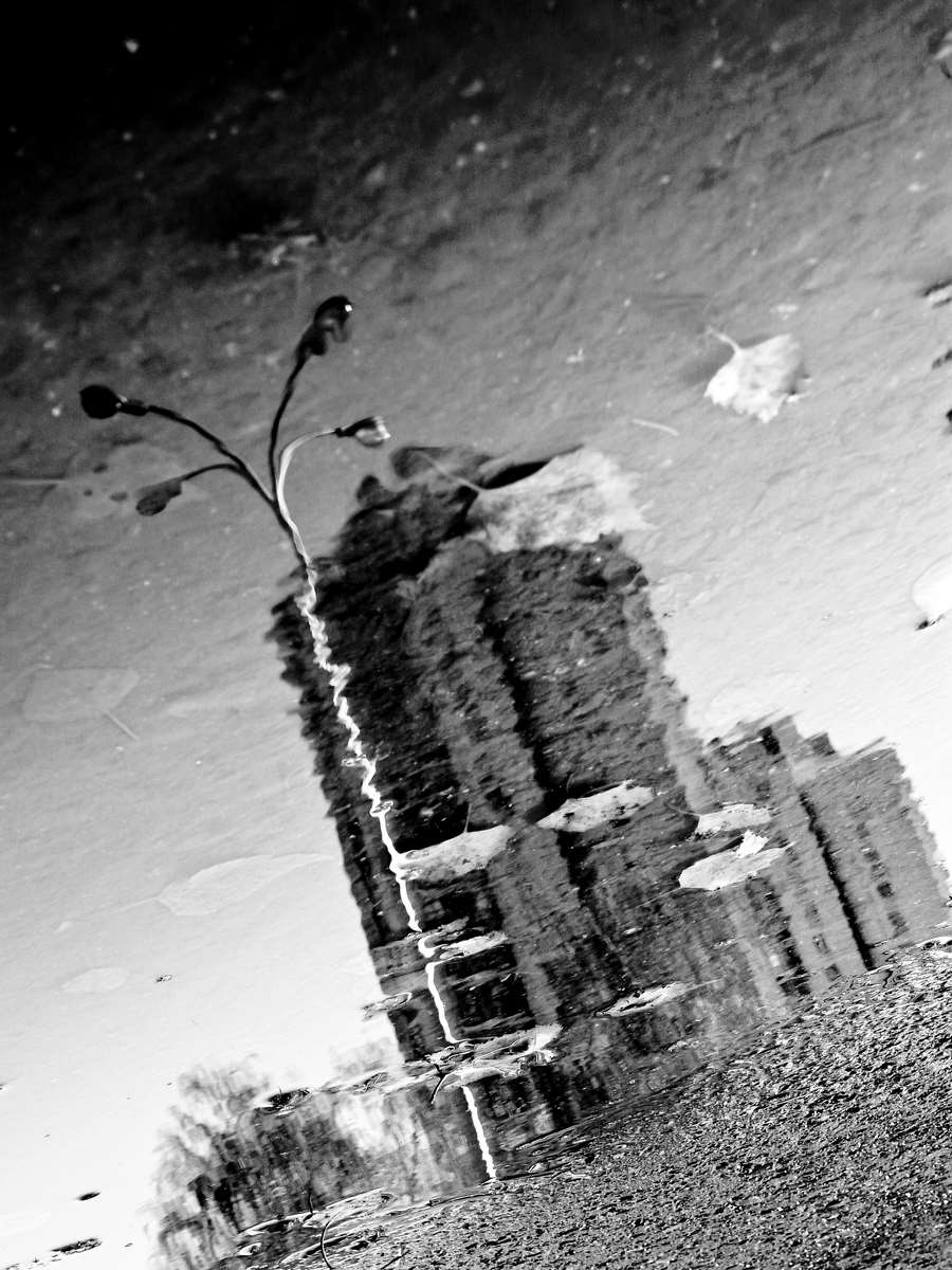 City in the Autumn reflections-bw
