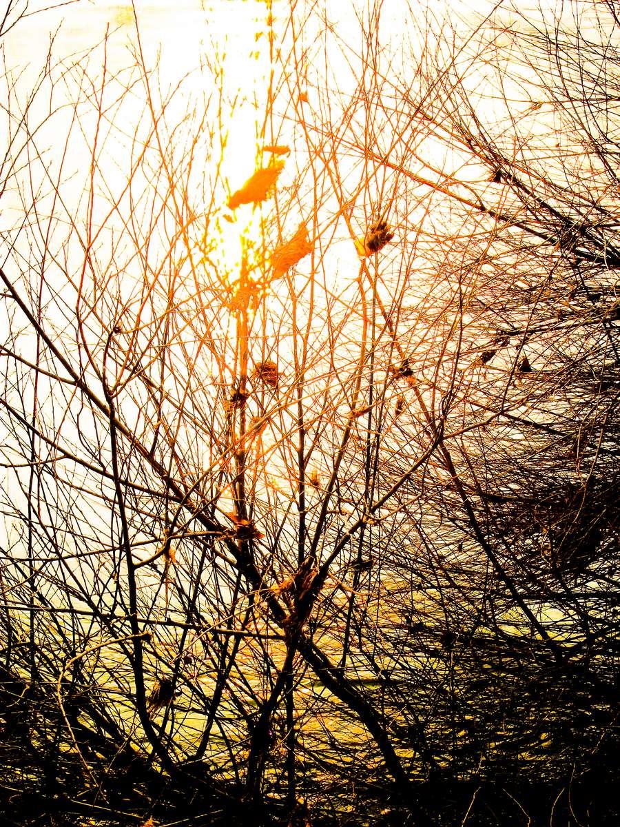 Sunny birds in Autumn branches