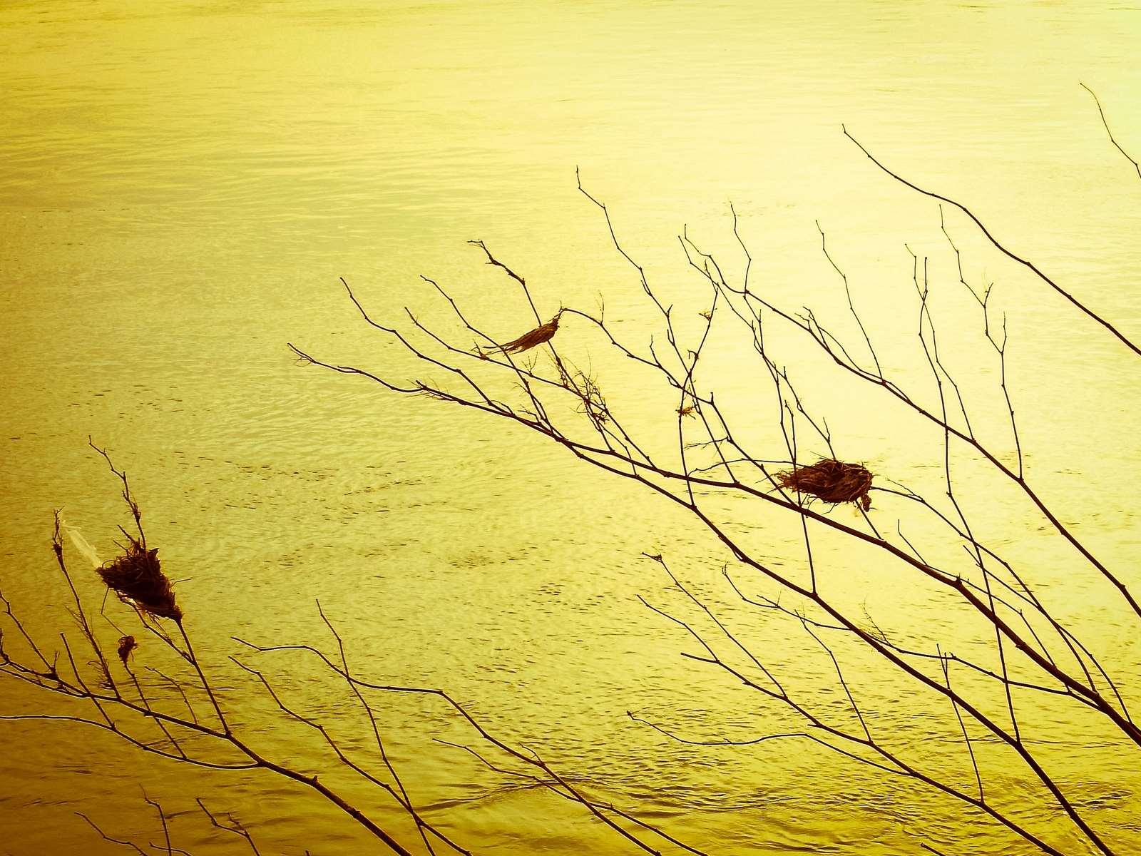 Leaf birds at the evening river