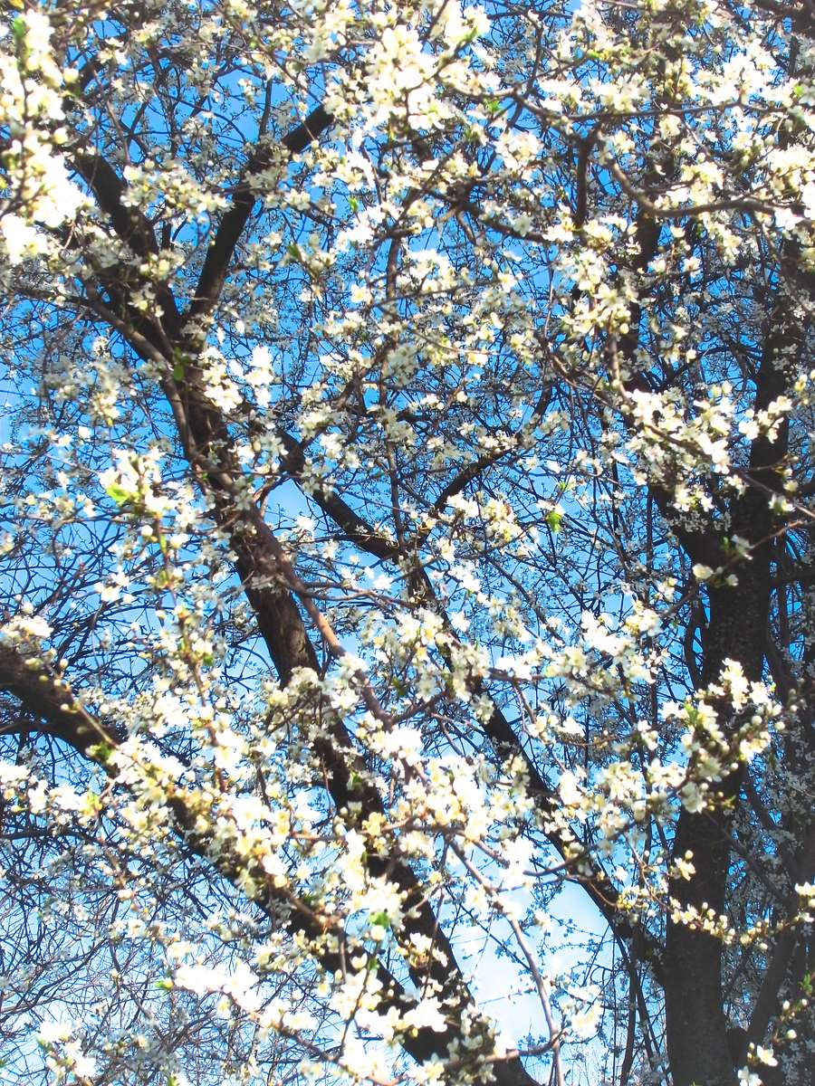 Spring Fulltime