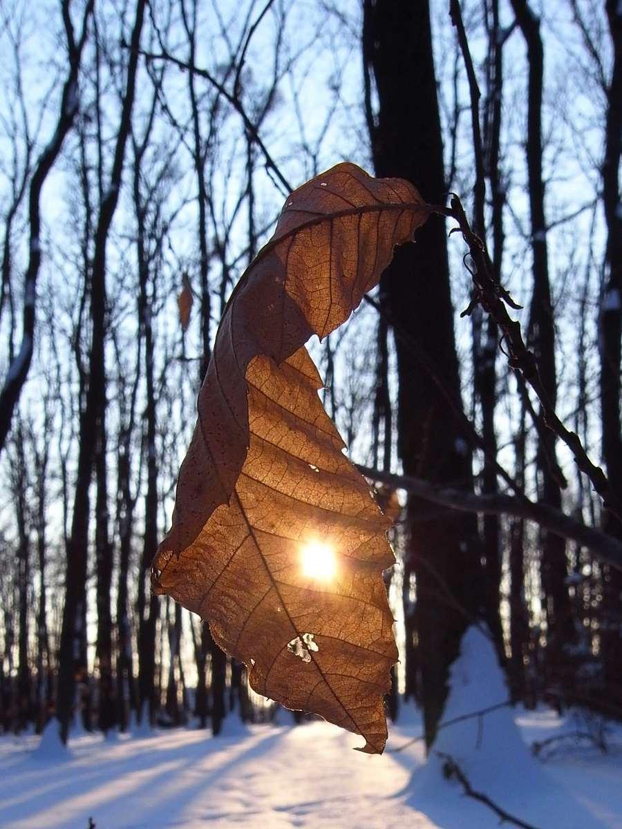 Winter leaf prescribing the sun therapy