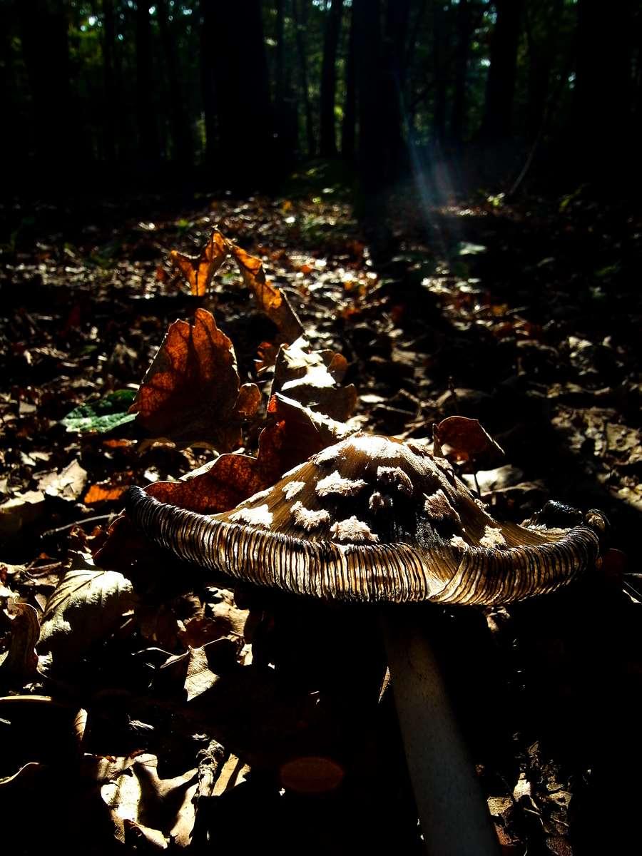 Mushroom Summer