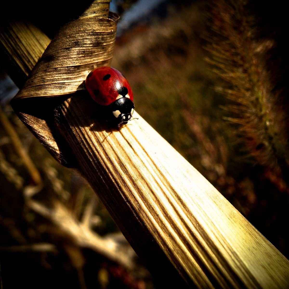 Ladybug enjoy