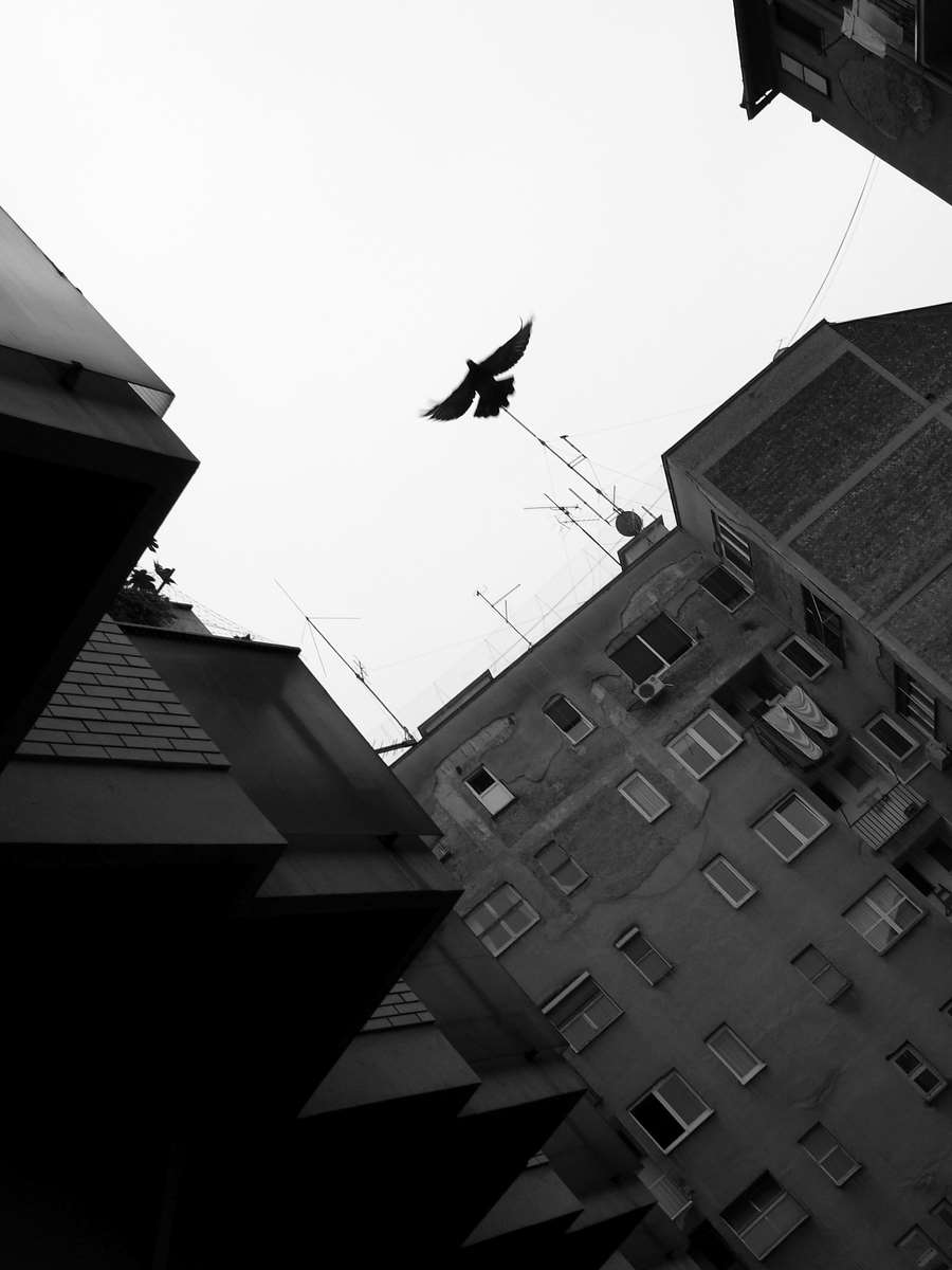 Open sky for the pigeon