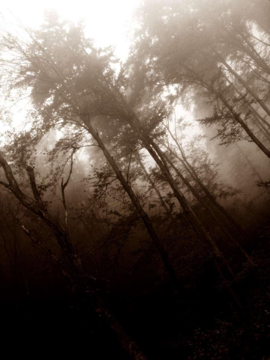 Forrest myst 2