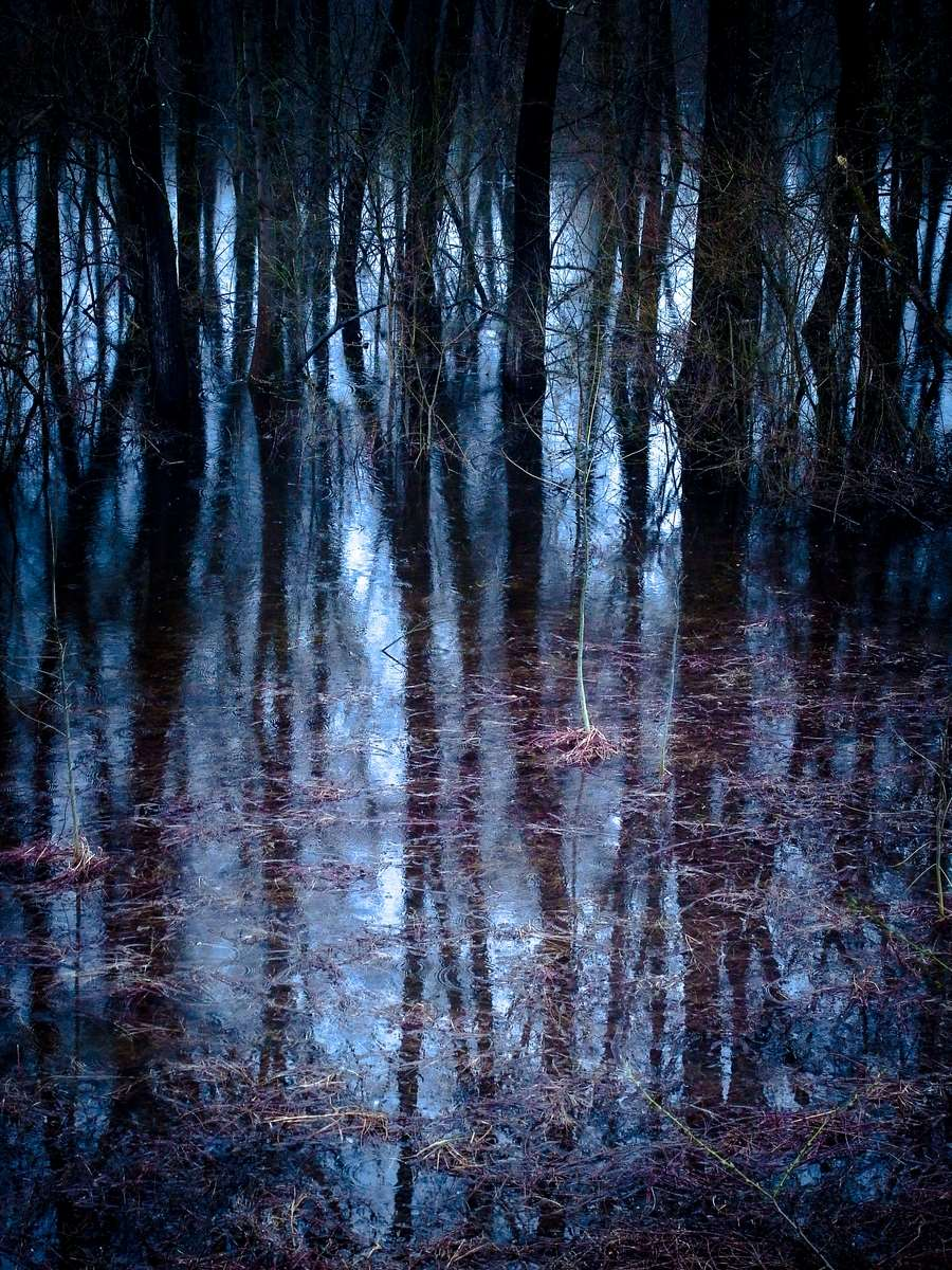 Trees in Blue Water