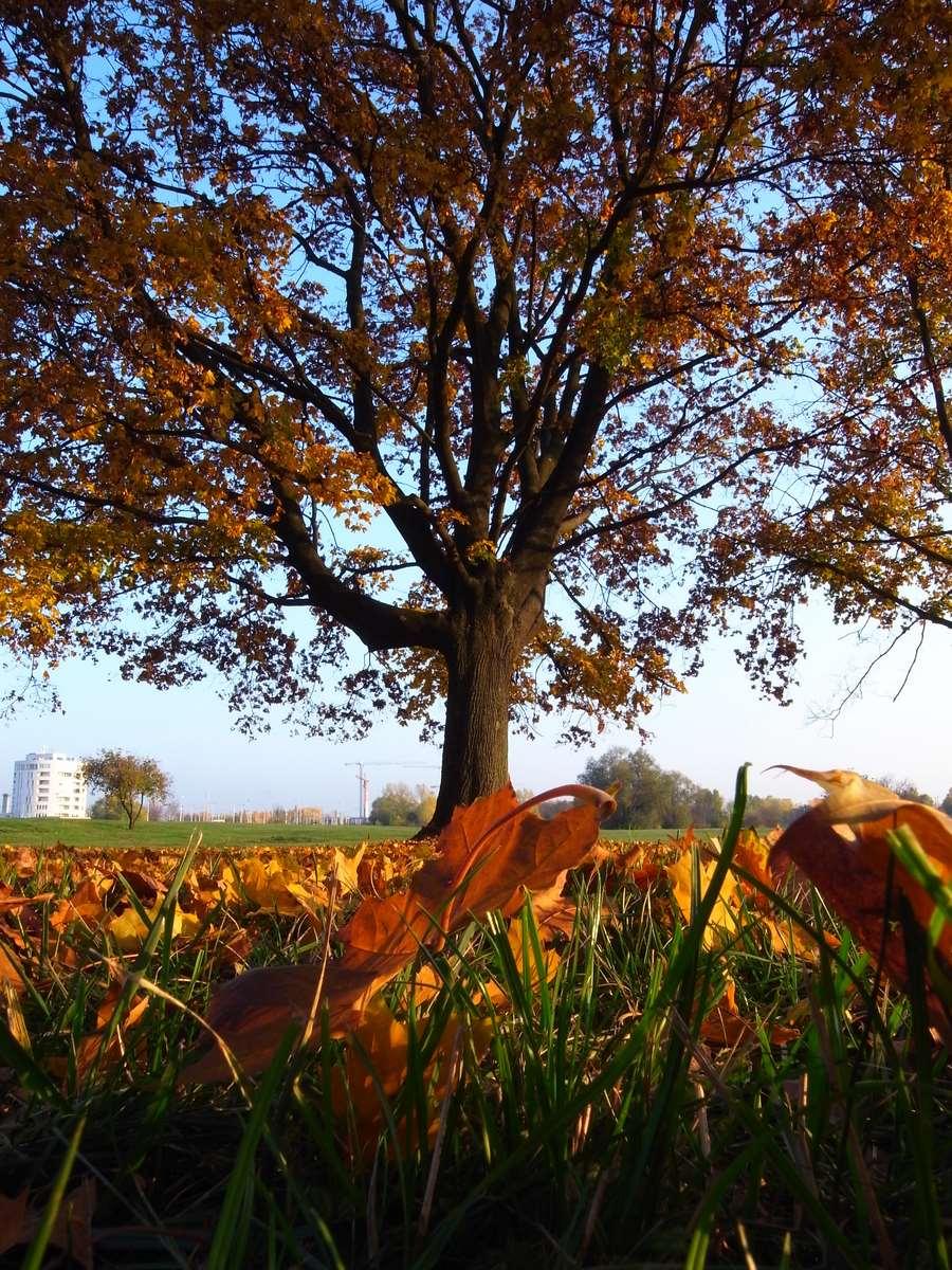 Just autumn lovely