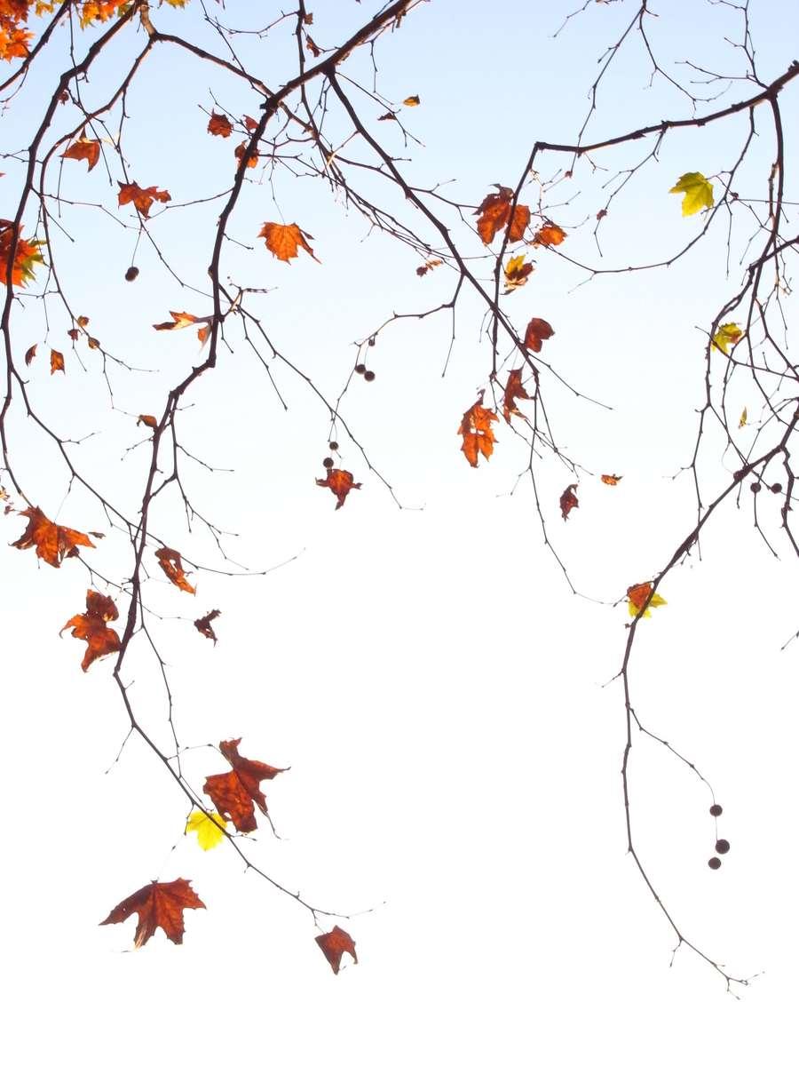 Filigran leaves in beauty colors