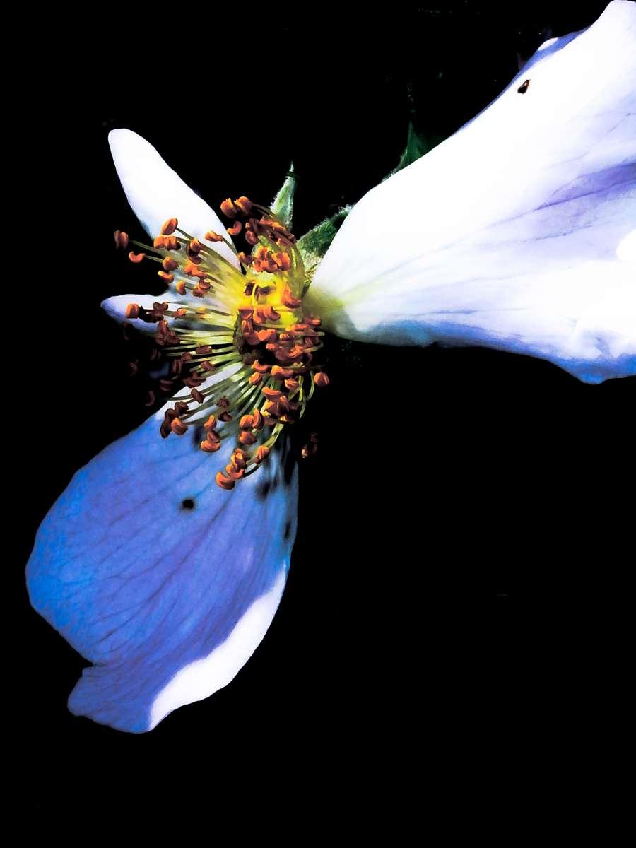 Propeler Flower