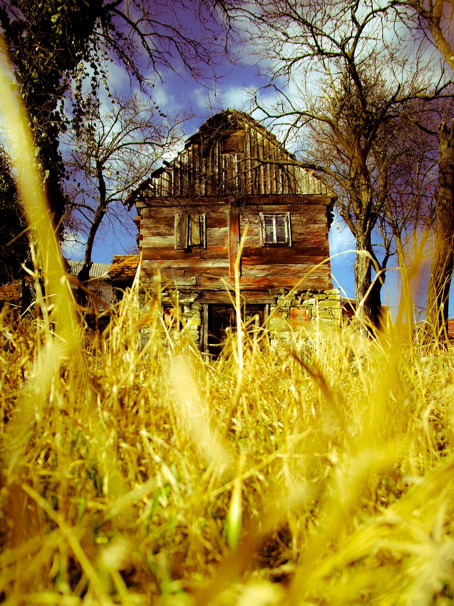 House in the yellow grass