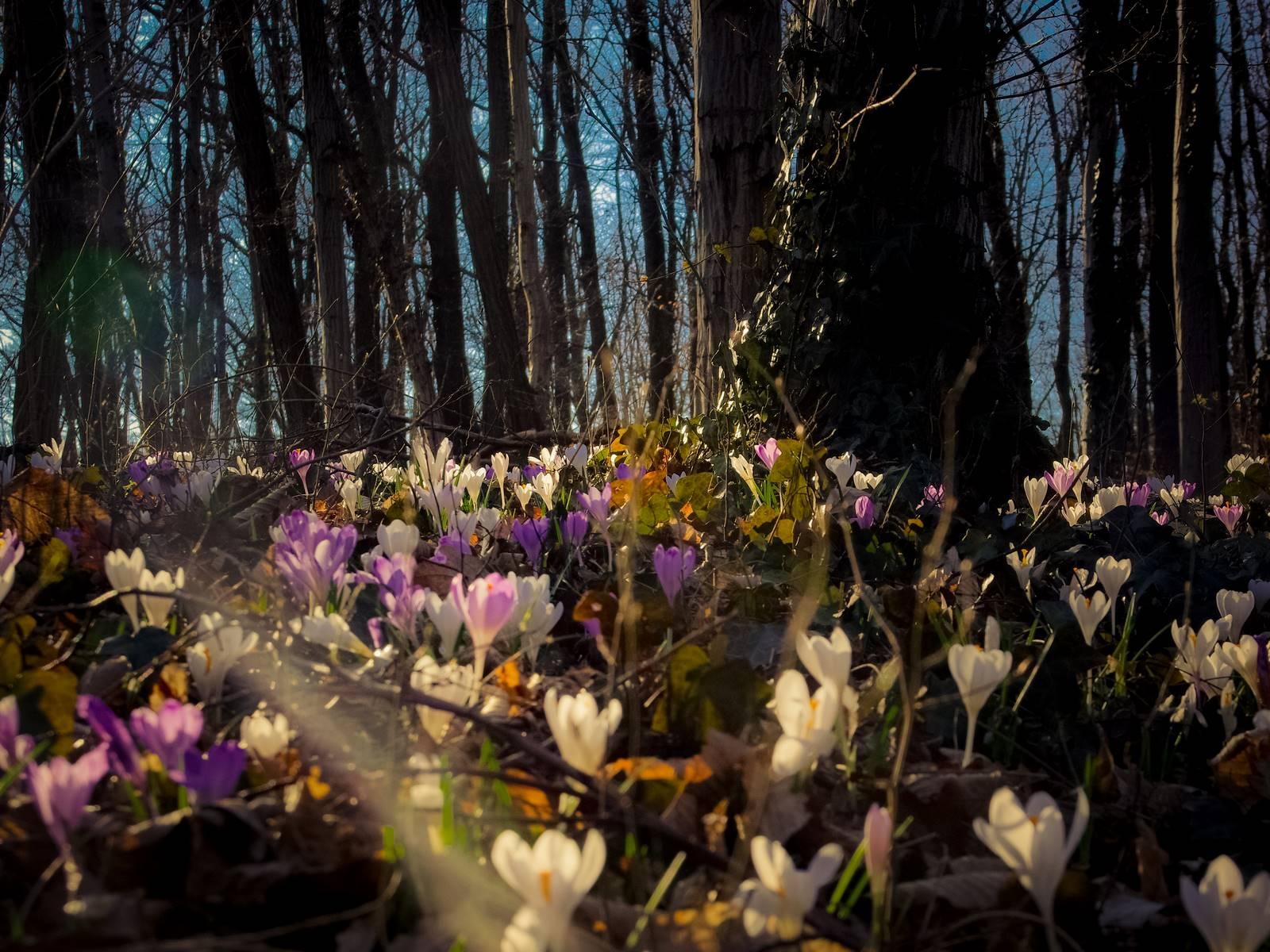Bloomy spring time