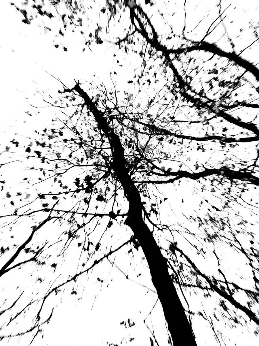 Monochrome Leaves Splash