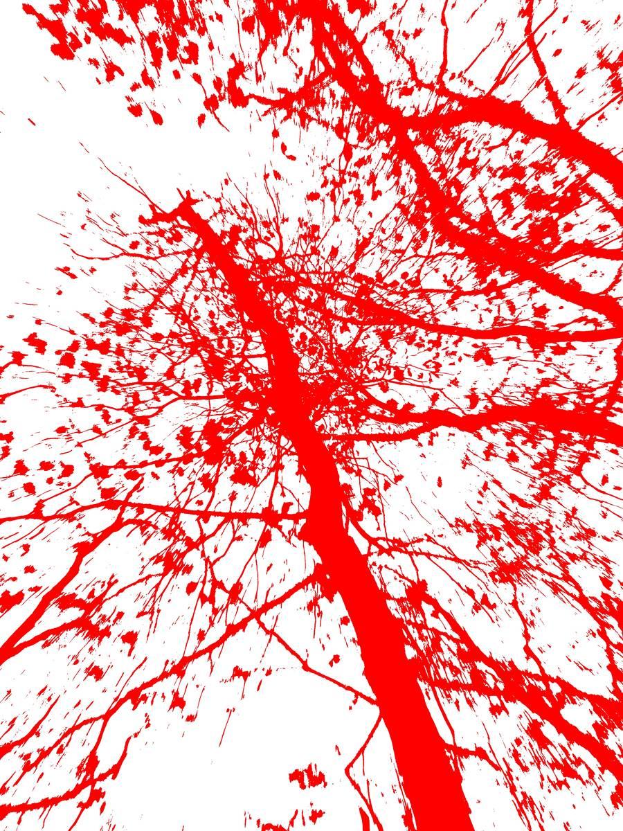Red leaves splashing