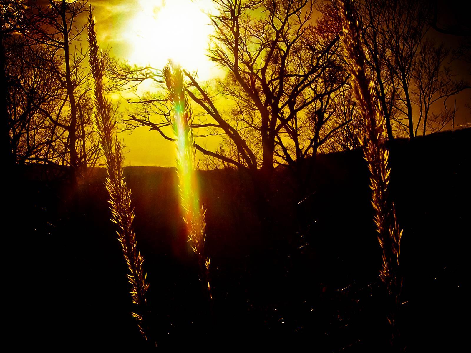 Sunrise in the wood